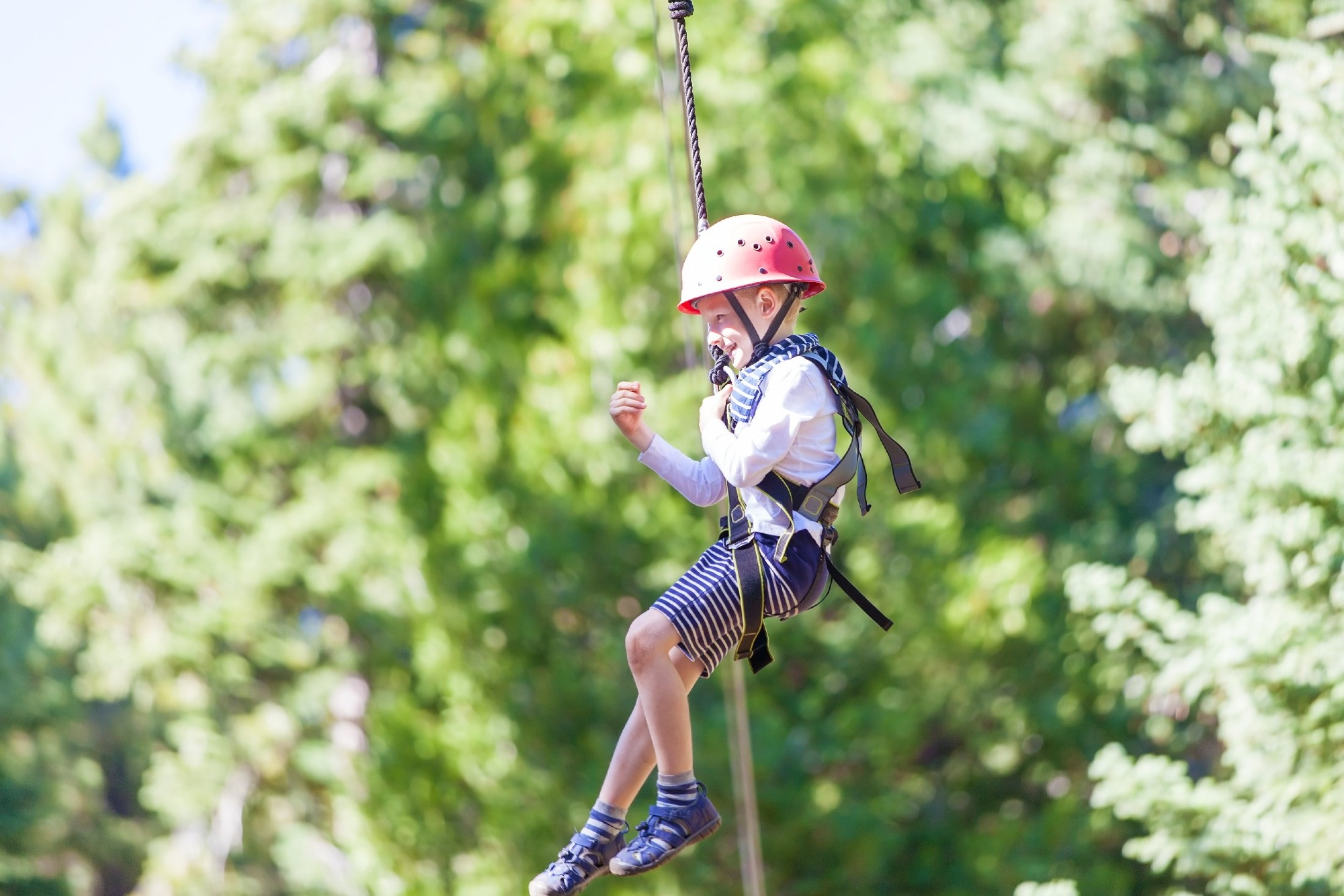 Zip into Spring with this Tree Top Adventure-1-2